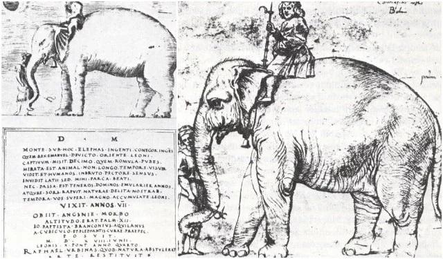 leo10-elephant.jpg