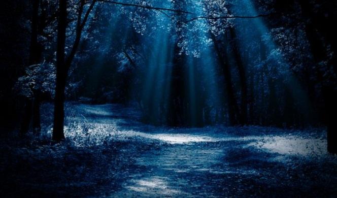 moon_through_trees_1.jpg
