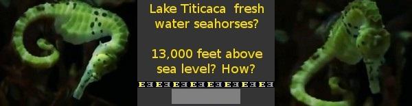 tease-lake-titicaca-freshwater-seahorses.jpg